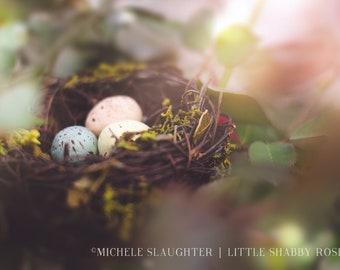 Bird Nest with Pastel Eggs Still Life Photography - Dreamy Fine Art Photograph of Bird Eggs in Twig Nest - Shabby Chic Easter Home Decor