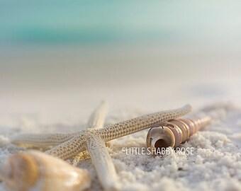 Seashell and Starfish Decor, Beach Starfish Art, Starfish and Seashell Art Photo, White Sandy Beach Art, Coastal Wall Decor