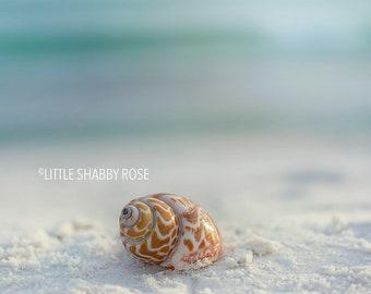 Seashell Wall Decor, Beach Shell Art, Shell Art Decor, White Sandy Beach Art, Coastal Wall Decor, Mint Aqua Blue Beach Art, 8x10 and under