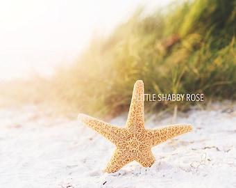Florida Starfish Photo Decor, Beach Starfish Art, Sunset Beach Sand Dune Photography, Golden Sand Starfish, Ocean Wall Photo