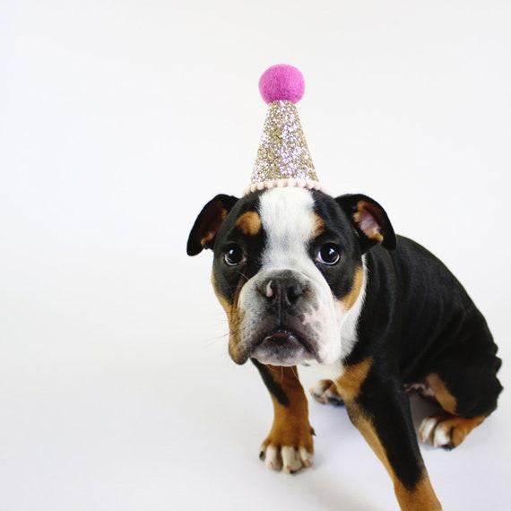 Hund Geburtstag Hut Haustier Geburtstagskrone Hund Etsy