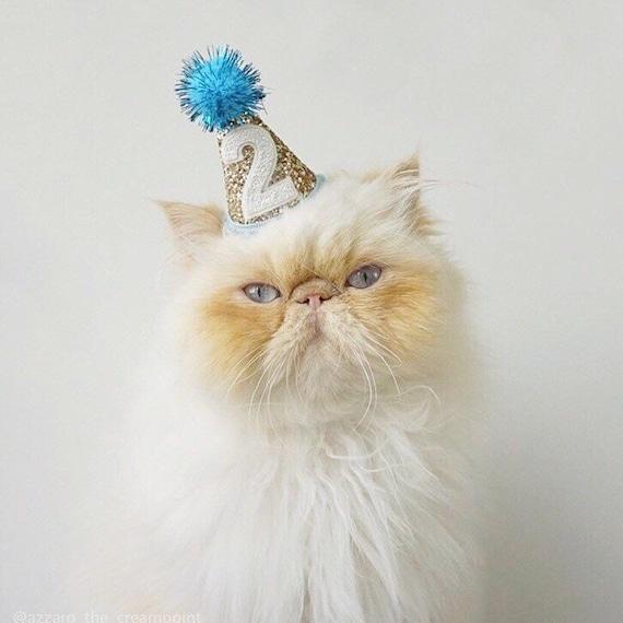 Cat Birthday Party Mini Hat