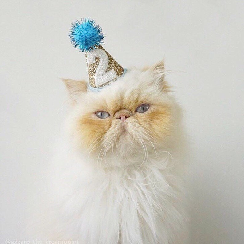 Cat Birthday Party Mini Hat