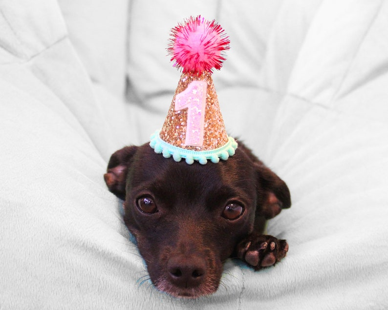 Dog Party Hat Mini Birthday For Puppy Pet