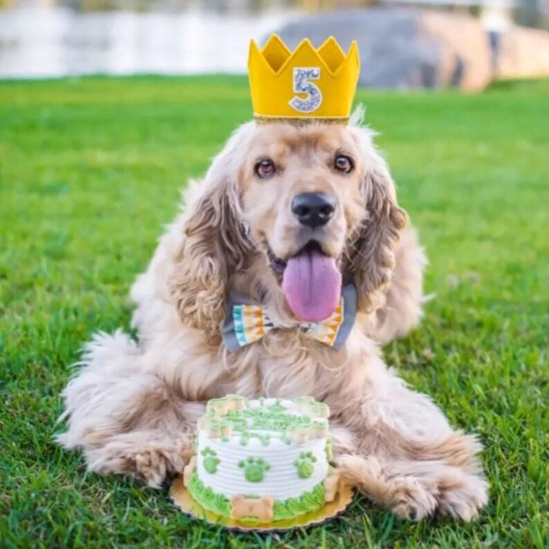 Dog Party Hat Pet Puppy Cat Kitten Kitty Pig Birthday Crown