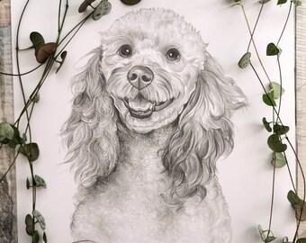 Custom pet portrait pencil drawing, original drawing of your pet, dog portrait, cat portrait