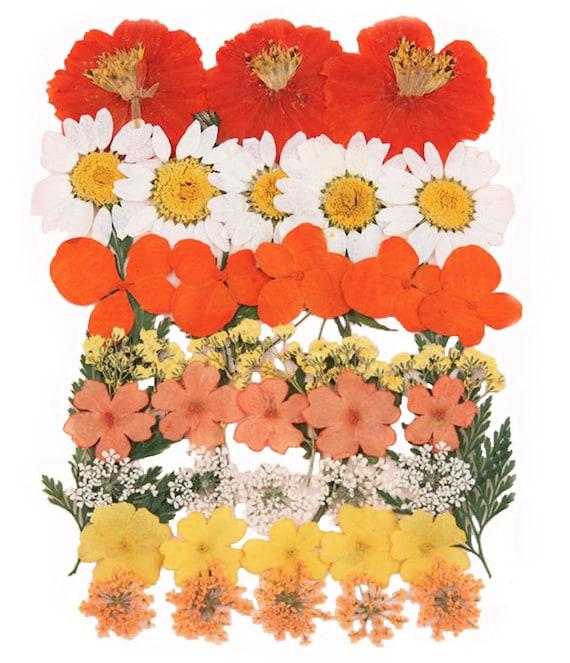 Scrapbooking Handwerk Kartenherstellung blaue Spitze Blume 20 St/ücke f/ür Kunst Gepresste Blumen