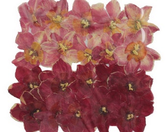 Pressed flowers Daffodils 2 colors, art craft card making scrapbooking materials