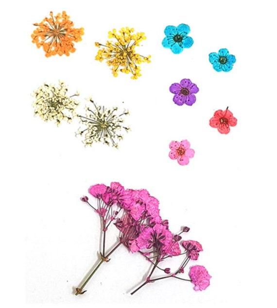 verbena in yellow pink lilac orange 20pcs floral art craft Pressed flowers