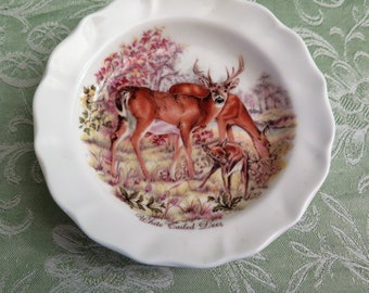 Vintage Deer Pin Dish - White Tailed Deer - Small Scottish Decorative Plate - Luckenbooth Bone China - Gift from Scotland - Scottish Gifts