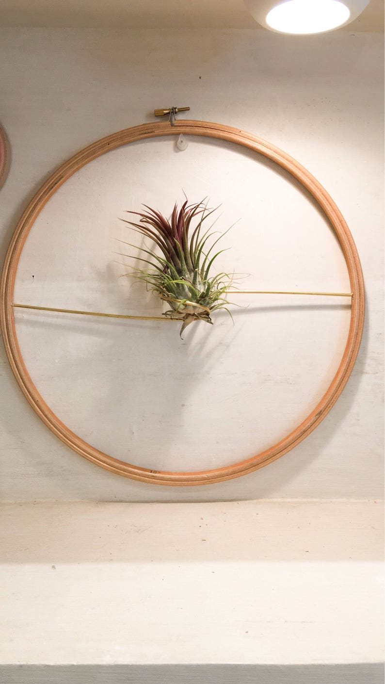 Aerial plant tillandsia with support image 0