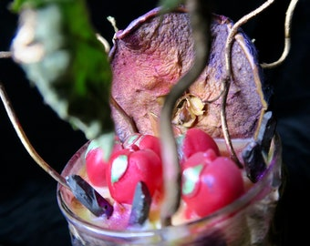 Poison Apple: Luxury Wax & Crackling Wooden Wicks - Forbidden Fruit - Candle - Gifts for Witches - Fairytale Apple - Folklore - Wisdom -