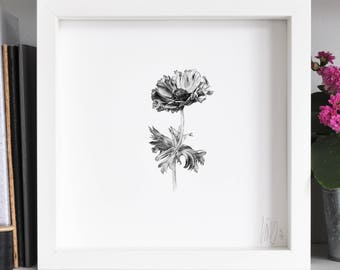 Anemone 2 Flower Print