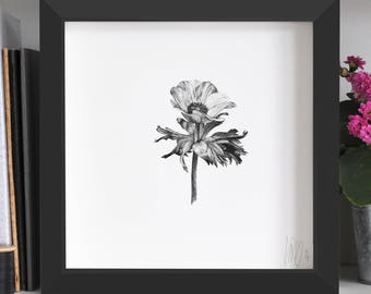 Anemone Flower Print
