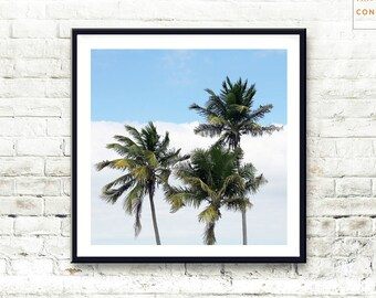 Palm Tree Print ~ Tropical Wall Art ~ Hawaii Photograph ~ Printable Large Poster ~ Green Plant Print ~ Digital Download ~ Modern Decor