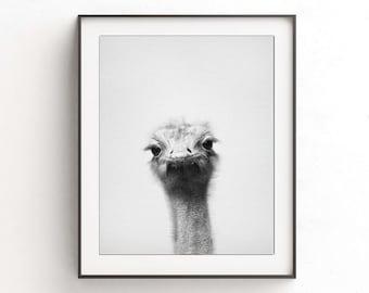 Ostrich print ostrich wall art nursery print digital print download printable nursery decor animal print black and white photo minimalist