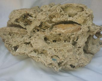 Large Coral Rock with 5 clam fossils ,14x10x7-Inches 30 pounds