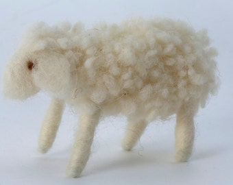 carded wool sheep