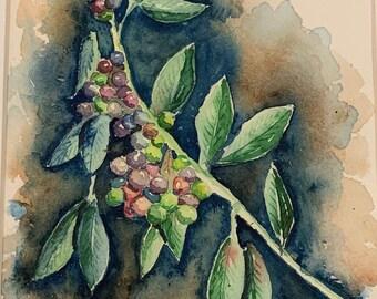 Grape Vine (Original Watercolor Painting)