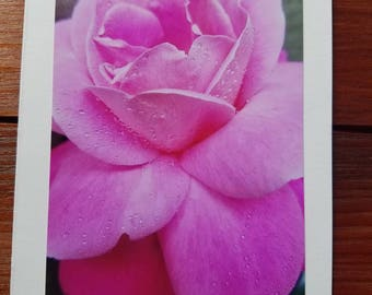 Droplets on Pink Rose, photo greeting card, blank