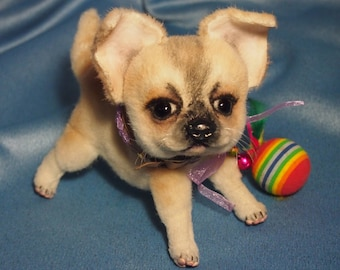 Bantik - puppy of a chihuahua
