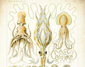 Octopus Print - Art Nouveau - Nautical Art - Marine Art - Octopus Art - Octopus Drawing - Ernst Haeckel - Oddities