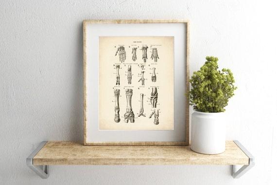 Mensch & Tiere Knochen Knochen Kunst Knochen-Bild | Etsy