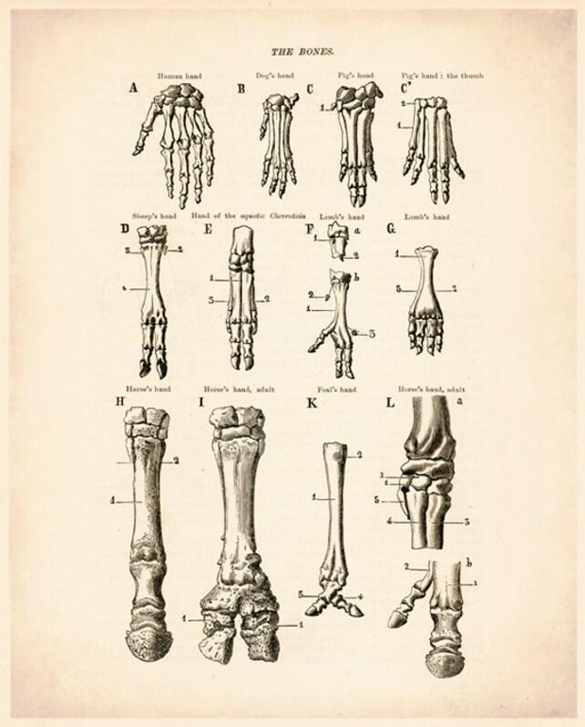 Human Animal Bones Bone Art Bone Picture Bone Drawing Etsy