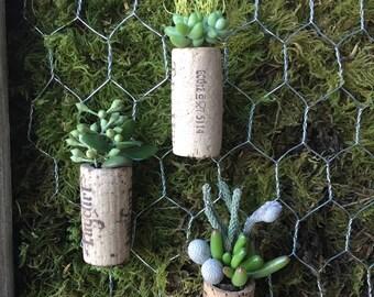Live Succulent Cork Magnets