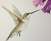 "Bloomin' Brunch Hummingbird Limited Edition Watercolor Print with 3"" Matting"