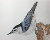 Peanut, nuthatch bird, original painting, watercolor, blue bird, wildlife art, wall hanging, watercolor artwork, realistic, bird art, cute