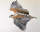 "Silent Pursuit Hawk Limited Edition Watercolor Print with 3"" Matting"