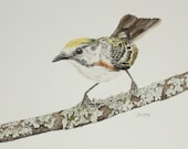 Chestnut, warbler bird, bird art, original painting, watercolor painting, watercolor art, realistic bird art, wall hanging, artwork,wildlife