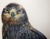 """Locked and Loaded Hawk Limited Edition Watercolor Print with 3"""" Matting"""
