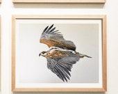 Silent Pursuit, Hawk painting,bird art, wall hanging, original watercolor painting, original artwork, realistic art, feathers, flying hawk