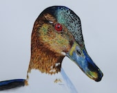 """Merganser Duck Limited Edition Watercolor Print with 3"""" Matting"""
