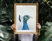 Penner Peacock, Original watercolor painting, Bird art, realistic painting, wall hanging, wildlife painting, peacock art