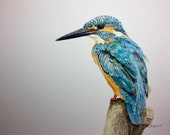 """Kingfisher bird the Waiting Game Limited Edition Watercolor Print with 3"""" Matting"""