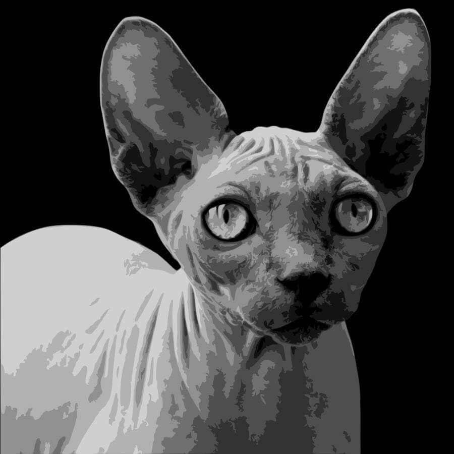 Sphynx Cat Layered Papercut Template Papercut Portrait Pet | Etsy