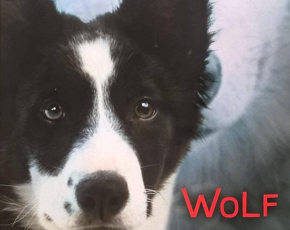 Wolf by Valerie Hobbs - First Edition Children's Books - Kid Book, Ranch Life, Sheep Herding Dogs, Border Collie