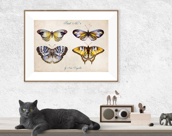 Butterfly print, Butterfly decor, Butterfly art, Butterfly poster, Insect print, Butterfly wall decor, Archival print, Home decor, Nursery