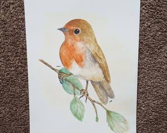 British Garden Birds- Robin