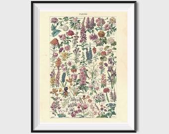 Vintage Flower Print, Antique Floral Prints, Floral Printable Art, Flower Poster, Flower Art Print Botanical Art, Antique Flower Art Print