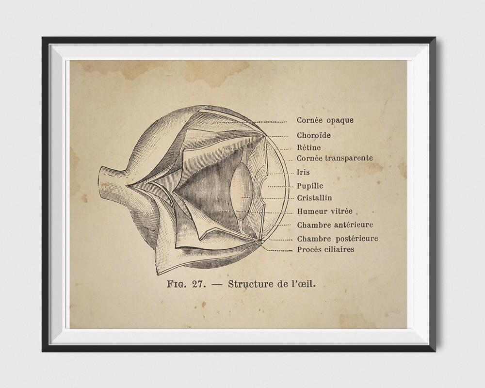 Anatomische Herz Poster druckbare Auge Diagramm Wandkunst