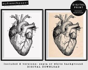 Anatomical Heart Print, Anatomy Heart Poster Vintage Anatomy Print, Heart Anatomy Art Print, Printable Anatomy Wall Art Anatomical Heart Art