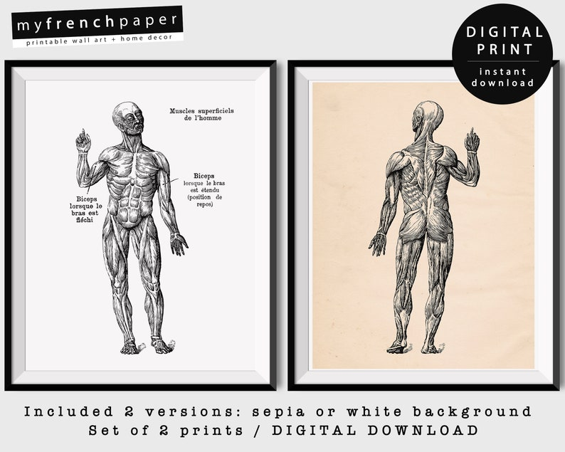 Vintage Anatomy Muscles Anatomy Art Medical Poster Art Human Etsy
