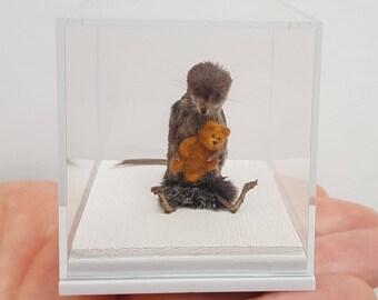 Taxidermy shrew holding his teddy bear