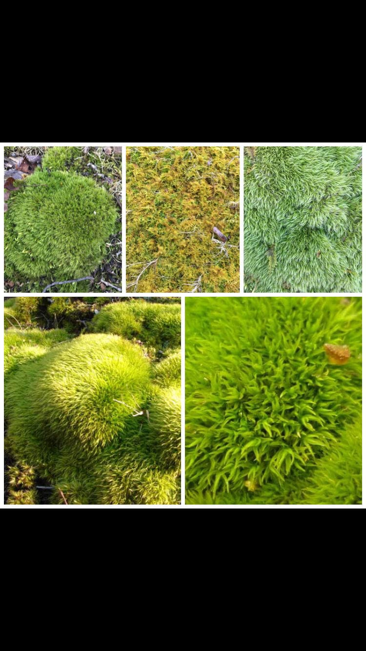 Perfect Moss Wall Art Gift - The Wall Art Decorations ...