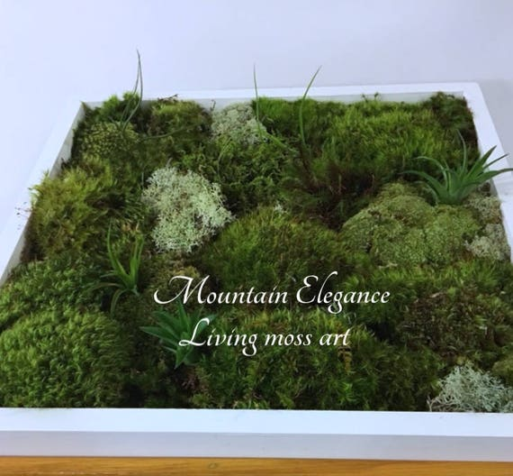 Ordinaire Living Wall Moss Art Kit DIY Various Sizes Free Ship On Most | Etsy
