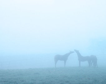 Horses in the Fog matted fine art archival print